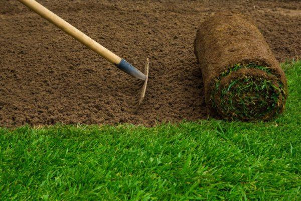Greener Garden = More Green In Your Pocket